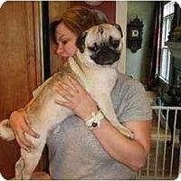 Adopt A Pet :: Frank - Ooltewah, TN
