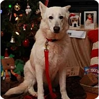 Adopt A Pet :: Lisbeth - Conyers, GA