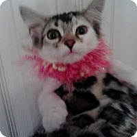 Adopt A Pet :: Flora - Sterling Hgts, MI