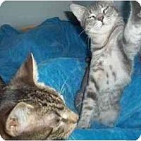 Adopt A Pet :: buddies - Little Neck, NY
