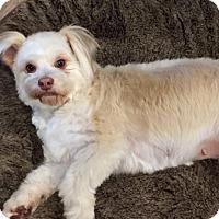 Adopt A Pet :: TIFFANY - Salt Lake City, UT