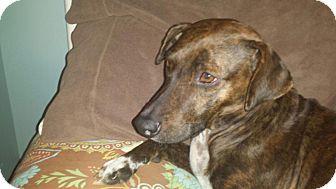 Terrier (Unknown Type, Medium) Mix Dog for adoption in Brick, New Jersey - Sienna