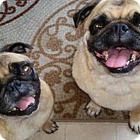 Adopt A Pet :: Bruno - Pismo Beach, CA