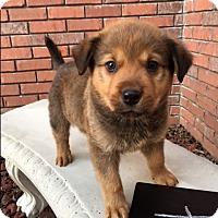 Adopt A Pet :: Ru - Bedminster, NJ