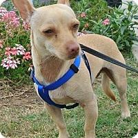 Adopt A Pet :: BRUCE - Mission Viejo, CA
