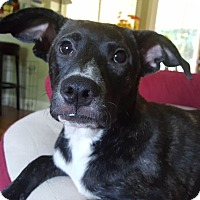 Adopt A Pet :: Gretchen - Knoxville, TN