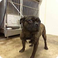 Adopt A Pet :: Paul - Upper Sandusky, OH