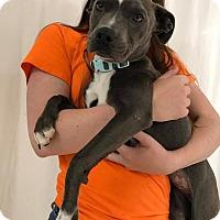 Adopt A Pet :: Serpent - Groveland, FL