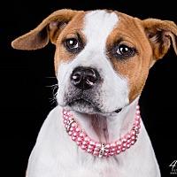 Adopt A Pet :: Poppy - Lodi, CA