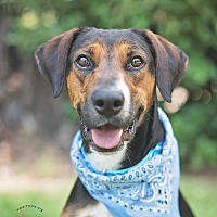 Adopt A Pet :: Elvis - Kingwood, TX