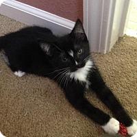 Adopt A Pet :: Eddy - Walnut Creek, CA