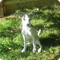 Adopt A Pet :: Regina - West Warwick, RI
