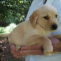 Adopt A Pet :: PARKER - Lincolndale, NY