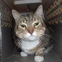 Adopt A Pet :: Turkey - Reno, NV