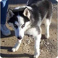 Adopt A Pet :: Micah - Belleville, MI