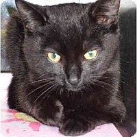 Adopt A Pet :: Baylor - Fort Lauderdale, FL