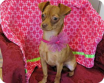 Chihuahua Mix Dog for adoption in High Point, North Carolina - Anna