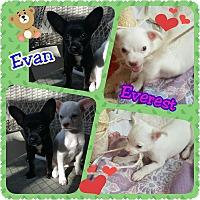Adopt A Pet :: Evan AKA Mario - Santa Rosa, CA
