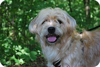 Terrier (Unknown Type, Medium) Mix Dog for adoption in New Castle, Pennsylvania - Seamus