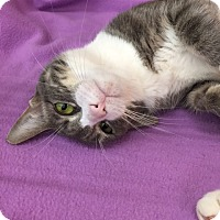 Adopt A Pet :: P.J. (LE) - Little Falls, NJ