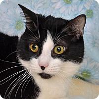 Adopt A Pet :: Angel - Englewood, FL