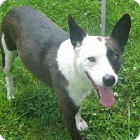Adopt A Pet :: Gracie - Hillsboro, OH
