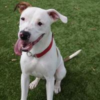 Adopt A Pet :: Coral (Cocoa Center) - Cocoa, FL