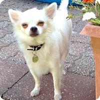 Adopt A Pet :: Zeus - Sparta, IL