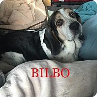 Adopt A Pet :: BILBO - Ventnor City, NJ
