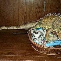 Adopt A Pet :: Carlos - Plainfield, IN