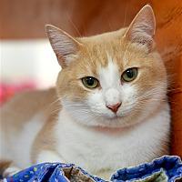 Adopt A Pet :: Butterscotch - Delaware, OH
