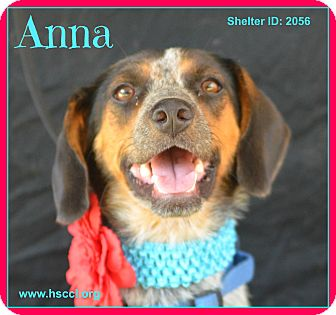 Beagle Mix Dog for adoption in Plano, Texas - Anna
