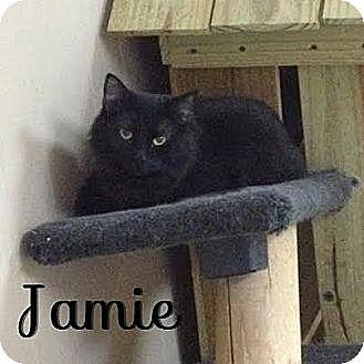 Domestic Longhair Cat for adoption in Jackson, Mississippi - Ricky Ricardo