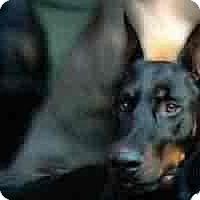 Adopt A Pet :: Aos - spring valley, CA