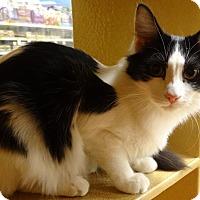 Adopt A Pet :: TULIP - Diamond Bar, CA