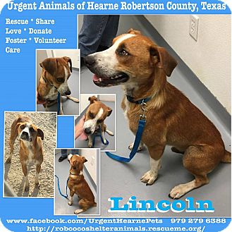 Cattle Dog Mix Dog for adoption in Hearne, Texas - Lincoln