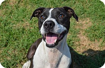 Border Collie Mix Dog for adoption in Santa Barbara, California - Dude