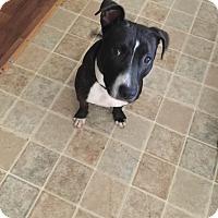 Adopt A Pet :: Felix - Monroe, NC