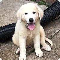Adopt A Pet :: Turner - Kyle, TX