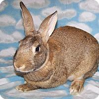 Adopt A Pet :: Padfoot - Alexandria, VA