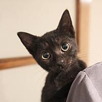 Adopt A Pet :: Karamel - Thornhill, ON