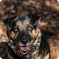 Adopt A Pet :: Teegan - Cincinnati, OH