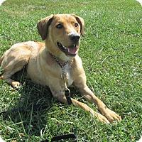 Adopt A Pet :: COPPER - LaGrange, KY