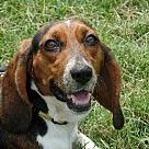 Adopt A Pet :: Lila