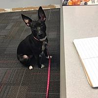 Adopt A Pet :: Mia - Essington, PA