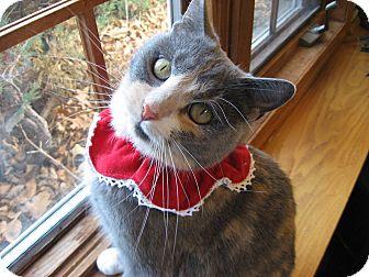 Domestic Shorthair Cat for adoption in Eagan, Minnesota - Star