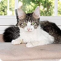 Adopt A Pet :: Sally - Xenia, OH