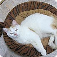 Adopt A Pet :: Sherman - Mobile, AL