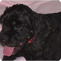 Adopt A Pet :: PENNY & BUDDY - Toluca Lake, CA