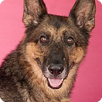 Adopt A Pet :: Hannah*ADOPTED* - Chicago, IL